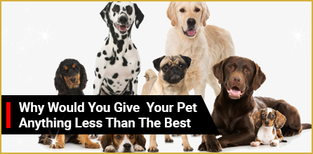 Give Your Pet Celebrity Treatment