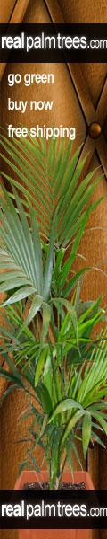 Palm Tree Store