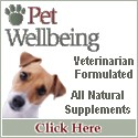 maintain your dog's health naturally