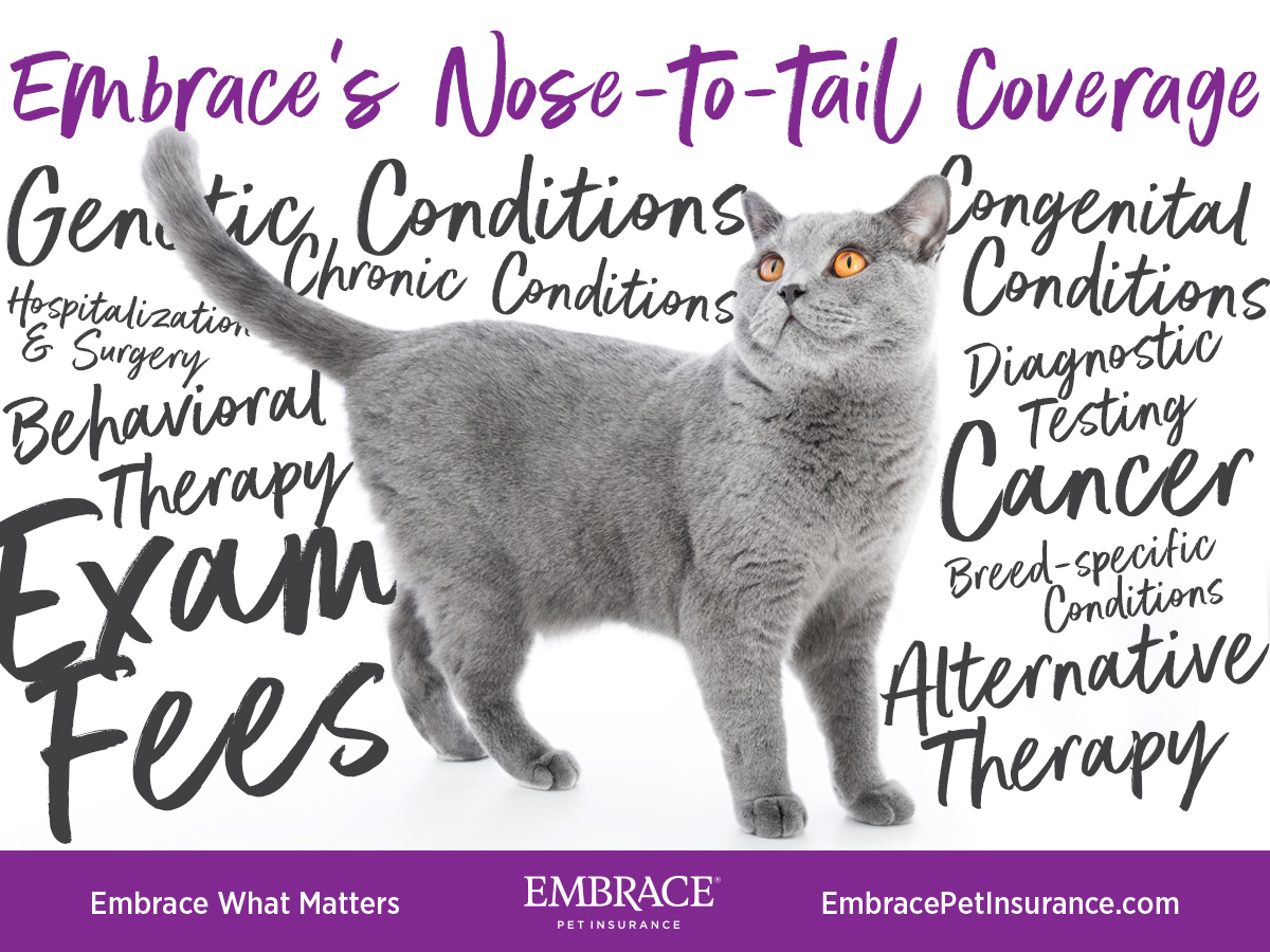 Nose to Tail Cat Coverage makes Embrace one of the best pet insurance for cats.
