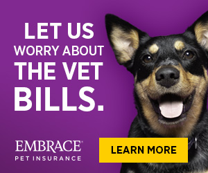 Let Us Worry About the Vet Bills