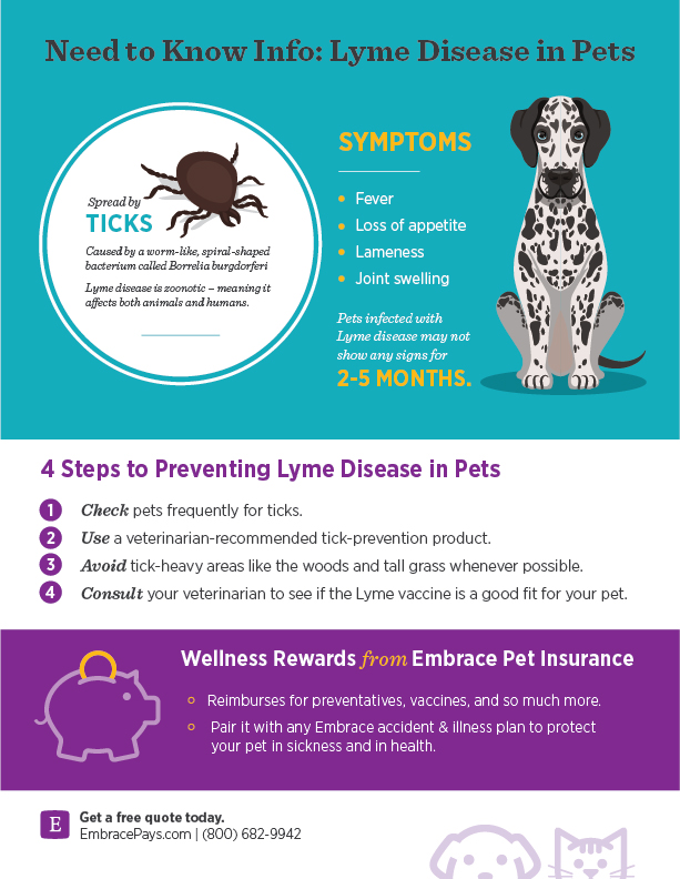 Tips to Prevent Pet Lyme Disease