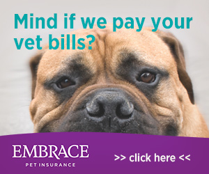 Get nose-to-tail pet insurance coverage with Embrace.