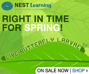 Watch caterpillars become butterflies from Nest Learning!