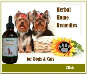Herbal Home Remedies for Dogs & Cats