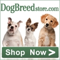 DogBreedStore.com - Nothing but the breed.