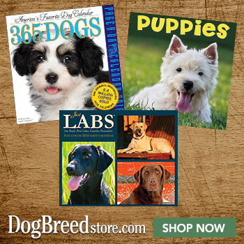 Shop DogBreedStore.com Now!
