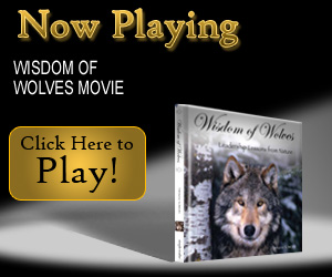 The Wisdom of Wolves Movie - Click Here!