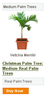 Christmas Palm Tree - Medium