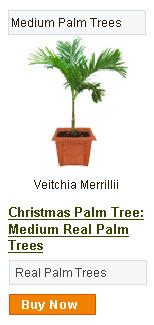 Christmas Palm Tree - Medium