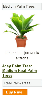 Joey Palm Tree - Medium