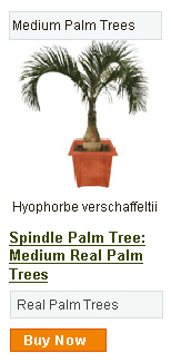 Spindle Palm Tree - Medium