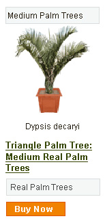 Triangle Palm Tree - Medium
