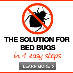 How To Prevent Getting Bed Bugs At A Hotel