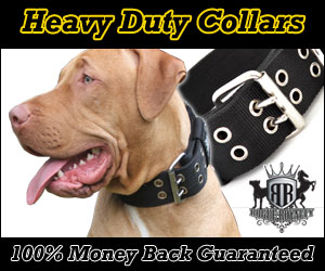 Rogue Royalty SupaTuff Dog Collars