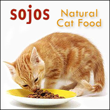 Real food for cats
