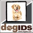 DogIDs
