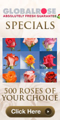 120x240 - Wedding Specials - 500 Roses Your Choice