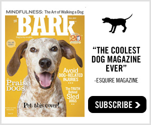 The Coolest Dog Magazine Ever! Subscribe