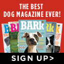 Subscribe to The Bark -- The Ultimate Dog Magazine