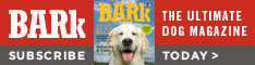 Subcribe to The Bark -- the Ultimate Dog Magazine