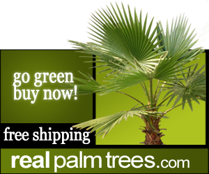 palm tree store christmas palm tree - Christmas Palm Trees For Sale