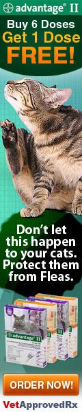 Eliminate Cat Fleas