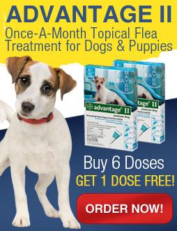 Elminate Dog Fleas