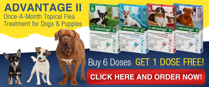 Eliminate Dog Fleas