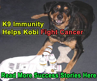 K9 Immunity Help Your Dog Fight Cancer