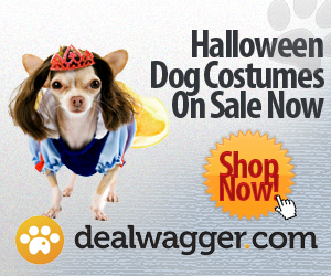 halloween costumes, dogs, dog halloween, dog costumes,