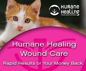 Cat wound, Cat Cut, Cat Burn, Wound Care