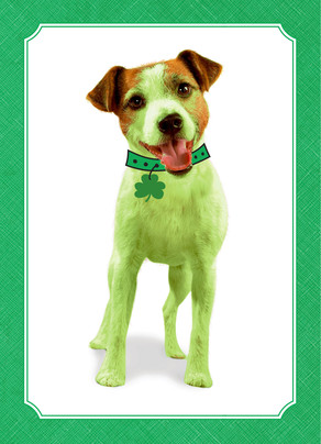99¢ St. Patrick's Day Cards at Cardstore! Use Code: CCC4227, Valid through 3/7/14. Shop Now!