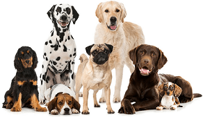 Free Dog Training Course for All Types of Dog Groups