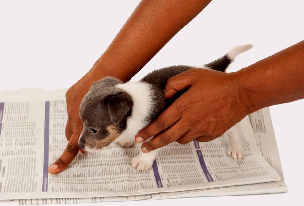 Trainpetdog.com - Free Course on Puppy Housebreaking