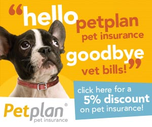 banner 300x250 0911 Do you have Pet Insurance?