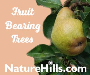 Shop Bartlett Pear Tree
