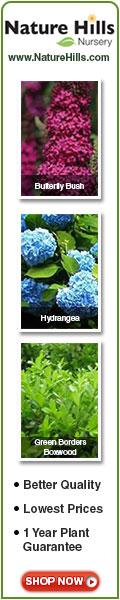 Zone 5 Flowering Shrubs