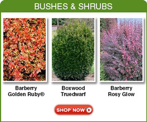 Bushes Shrubs