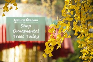 Shop Ornamental Trees