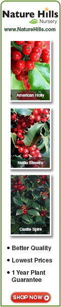 Shop for Holly Shrubs at NatureHills.com