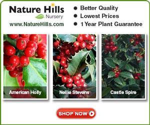 Shop for Holly Shrubs at NatureHills.com