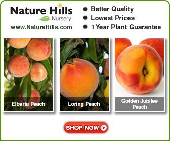Shop for Peach Trees at NatureHills.com