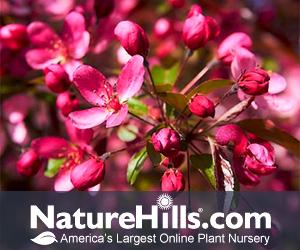 Shop Fall Tree at Nature Hills