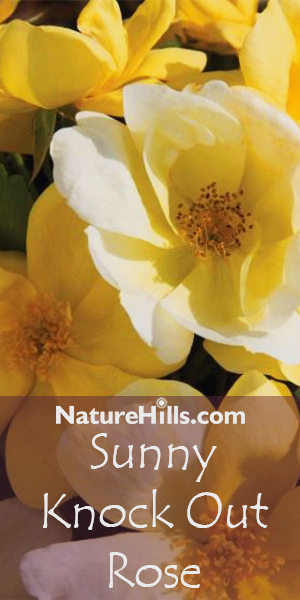 Shop Shrubs and Bushes at Nature Hills