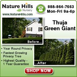 Thuja Green Giant