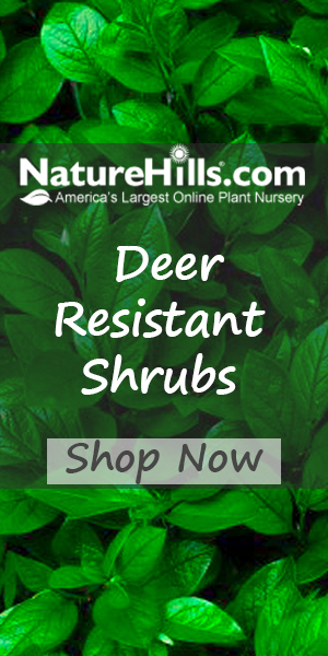 Shop Shrubs at Nature Hills