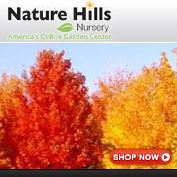 Shop for trees with great fall colors at NatureHills.com