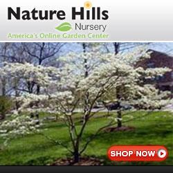 shop for flowering Dogwood trees