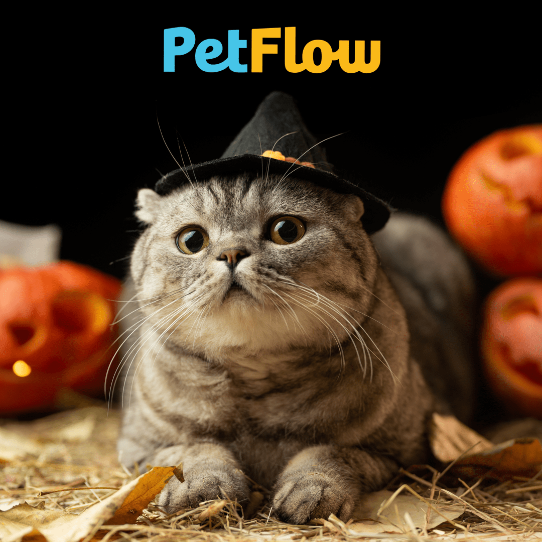 Shop Halloween at PetFlow!